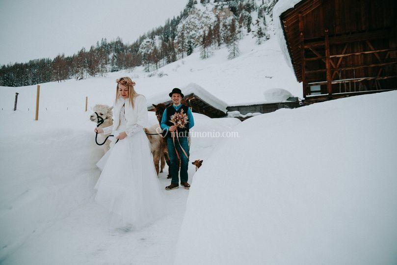 Passeggiata con Alpca Sposi