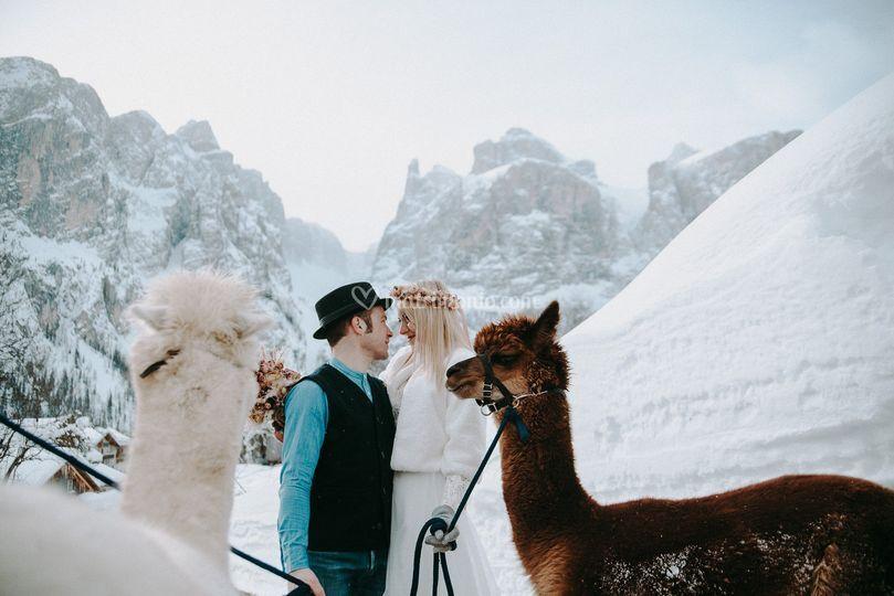 Fuga d'amore con alpaca