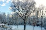 Croce di malta e la neve