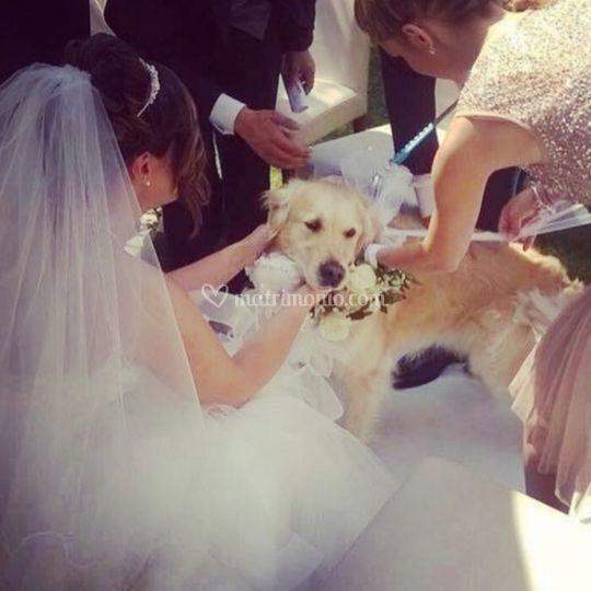 Wedding Pet Sitter ®
