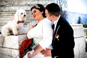 Sogni A Colori - Wedding Dog Sitter