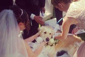 Wedding Pet Sitter®