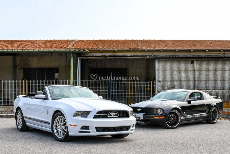 Mustang V6 & V8