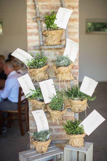 Tableau piante aromatiche
