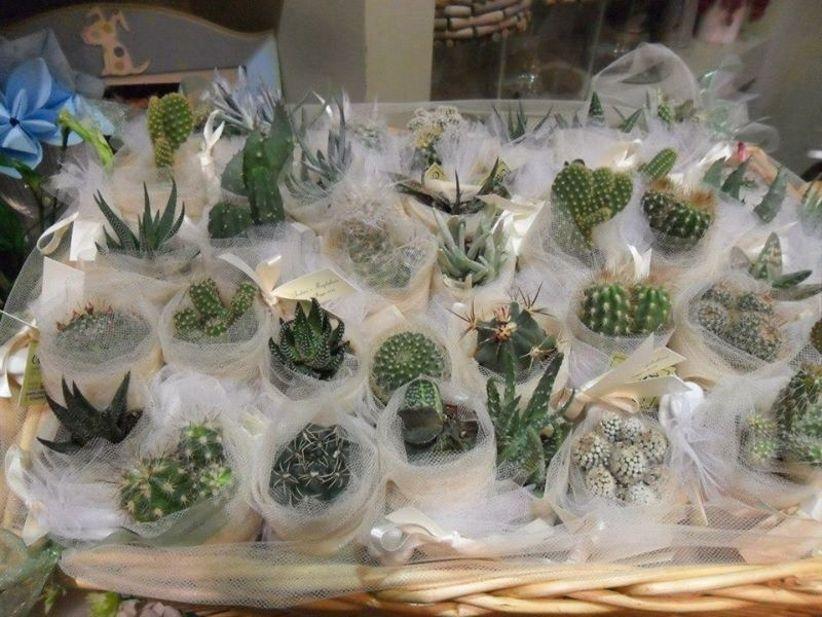 Matrimonio Tema Piante Grasse : Decorazioni con le piante grasse: una proposta ecofriendly per il