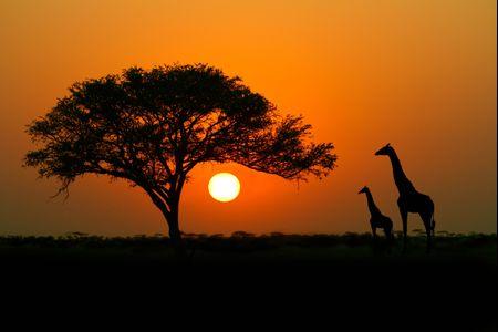 Viaggio di nozze in Kenya: eleganti cene a Nairobi e avventurosi safari