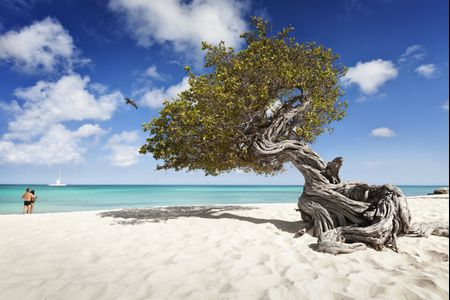 A un passo dal cielo: la vostra luna di miele nell'isola felice di Aruba