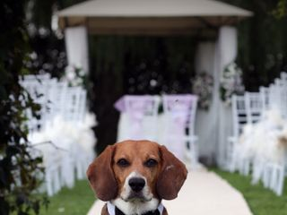 Orma di Maya - Wedding Pet Sitter 2