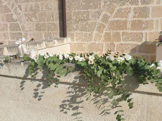Anna Mattacchione flowers 1