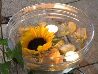 Piante e Fiori Gardenia 2