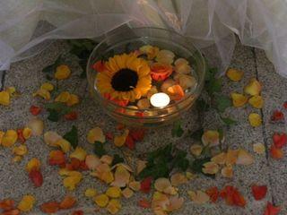 Piante e Fiori Gardenia 5