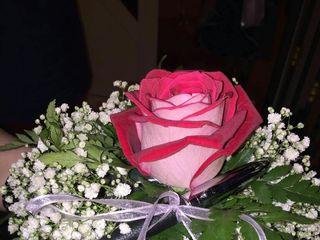 Floricoltura Shalom 4