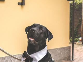 Wedding Dog Sitter 6