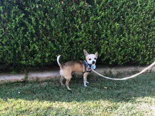 CaniAmo - Wedding Dog Sitter 3