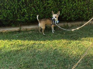 CaniAmo - Wedding Dog Sitter 4