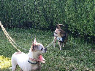 CaniAmo - Wedding Dog Sitter 5
