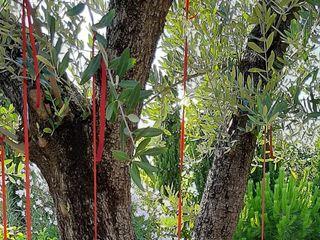 Tenuta Cipressi e Olivi 5