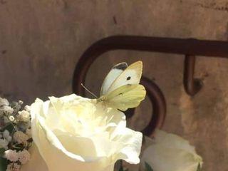 Farfalle per Eventi 4