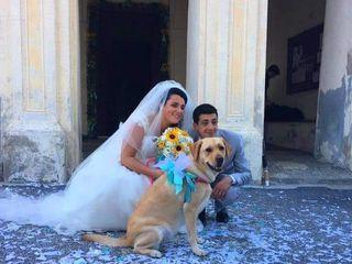 Wedding Pet Sitter ® 1