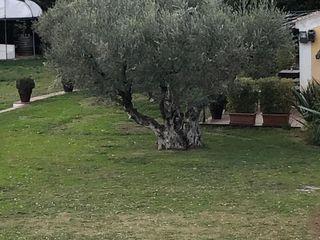 Castello di Serragiumenta 3
