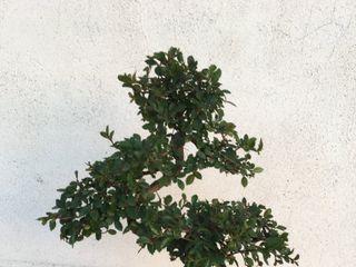 Bonsai-Do 2