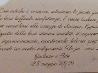 Gigi Piante Grasse 5
