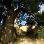 Castello di Contignaco 3