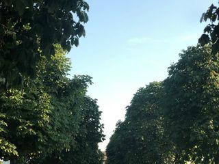 Foresteria Cavicchioli 4
