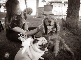 Wedding Dog Sitter 3