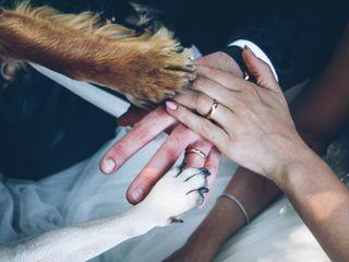 Wedding Dog Sitter 4