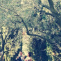 Tenuta Cipressi e Olivi 24