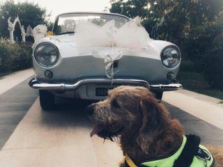 Silvia Wedding Dog Sitter 4