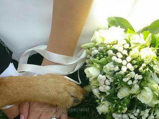 Wedding Dog Specialist Martina Ossola 6