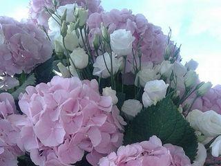Flor de Lis 5