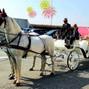 Le nozze di Sofia e White Horse 6