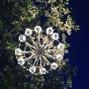 Nibel - Atelier floreale 10