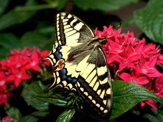 Farfalle per Eventi 5