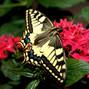 Le nozze di Elena F. e Farfalle per Eventi 8
