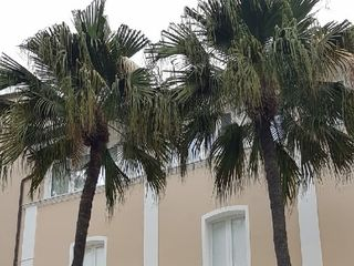 Mediterraneo Palace Hotel 5