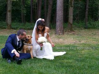 Wedding Dog Specialist Martina Ossola 4