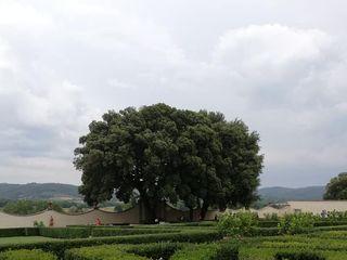 Villa Monsoglio 5