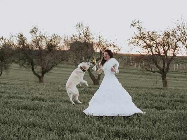 Il matrimonio di Riccardo e Maria a Genzano di Lucania, Potenza 1