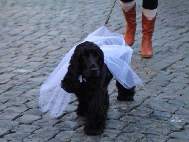 Il matrimonio di Francesca  e Luca a Viterbo, Viterbo 4