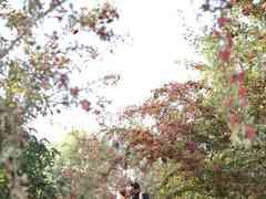 le nozze di Alexia e Andrea 15
