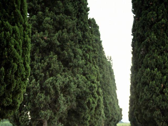 Il matrimonio di Filippo e Elisa a Vinci, Firenze 28