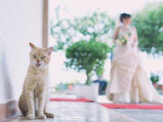 Le nozze di Mara e Pasquale 3