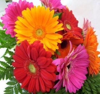10 fiori economici moda nozze forum for Fiori gerbere