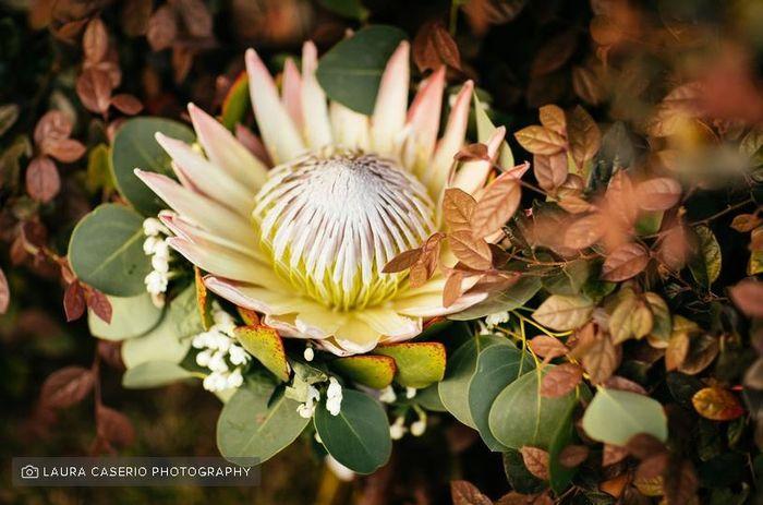 Bouquet di protea: sì o no? 1