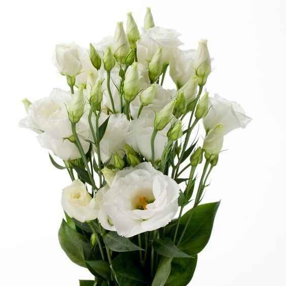 Bouquet ortensie e rose inglesi in agosto? - 3