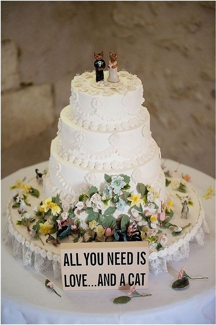Matrimonio Tema Gatti : Il mio tema matrimonio gatti organizzazione